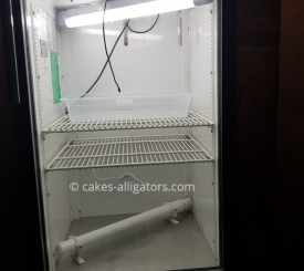 Our incubator for Chinese Alligator Eggs